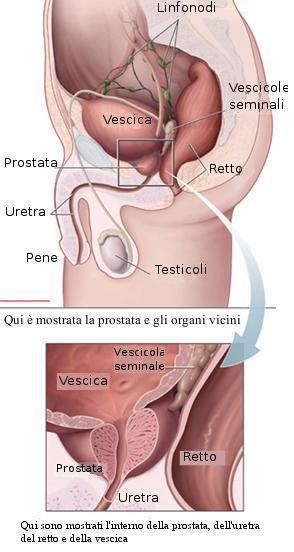 prostata dopo i 50 anni 1