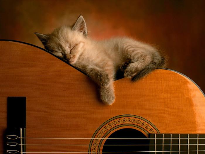 chitarra e gatto relax