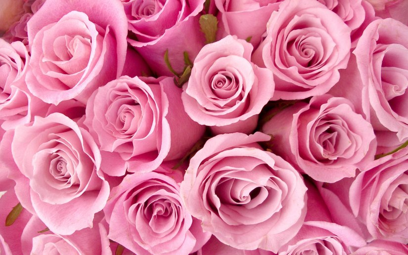Campagna Nastro Rosa ROSE LILT